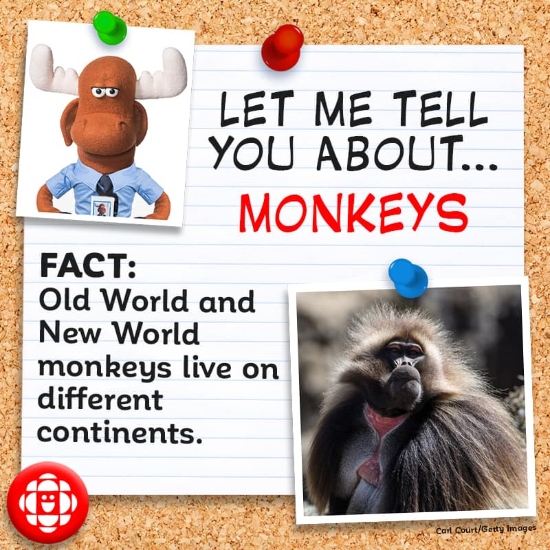 Old World and New World monkeys live on different continents.