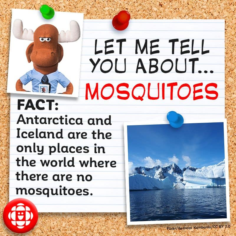 Antarctica and Iceland are the only places in the world where there are no mosquitoes.
