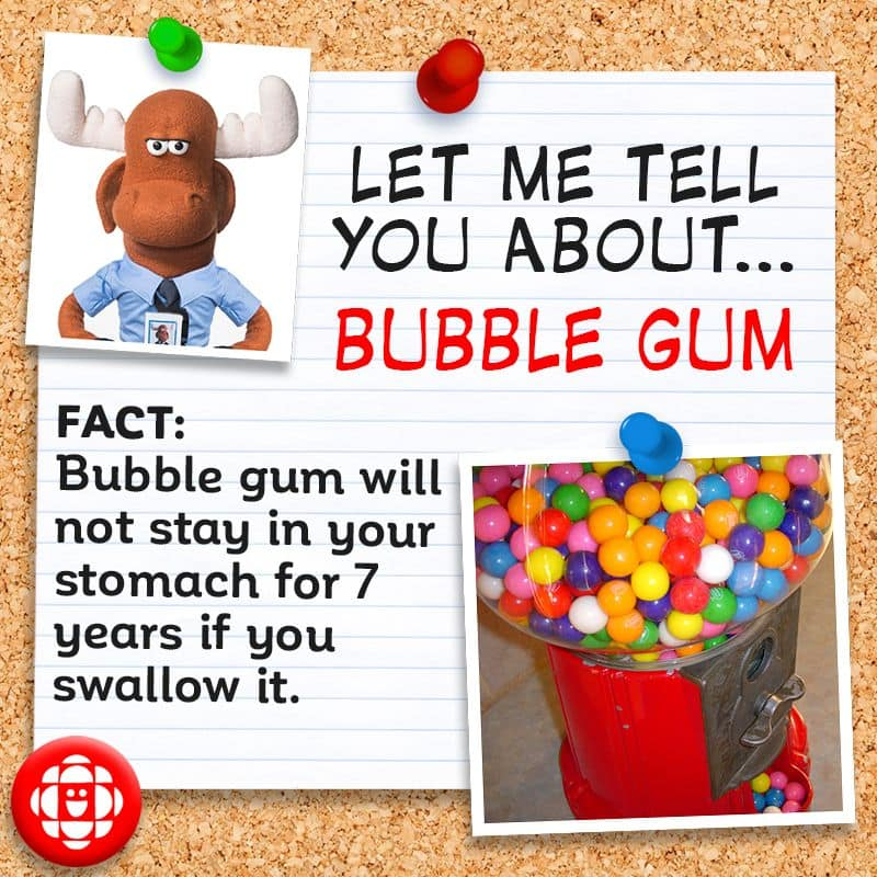Bubble gum will not stay in your stomach for 7 years if you swallow it.