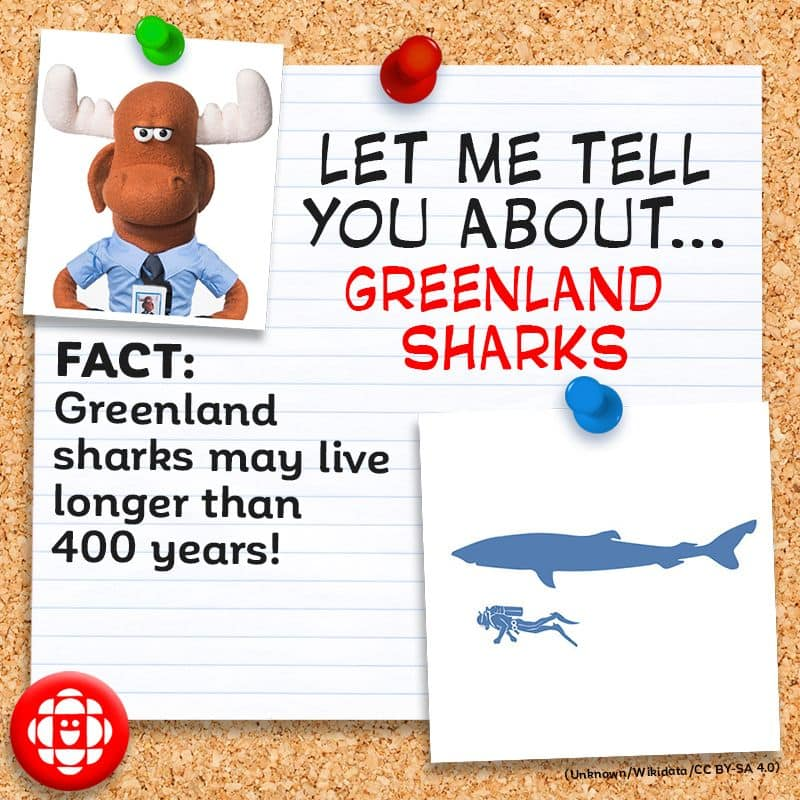 Greenland sharks may live longer than 400 years.