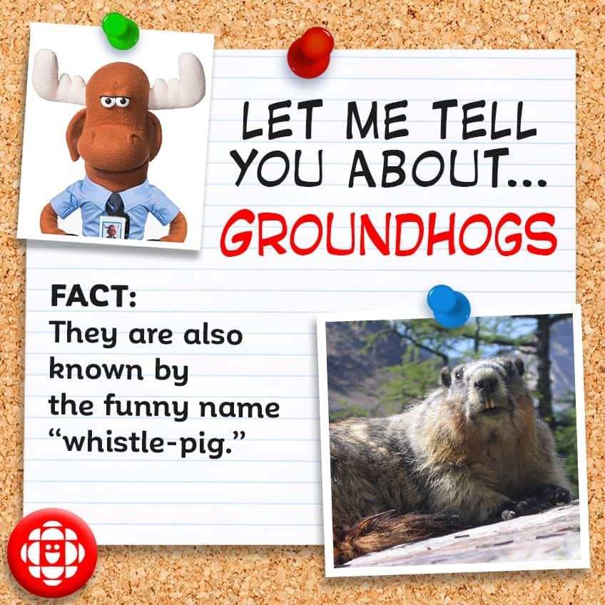 """Fact: They are also known as a """"whistle-pig."""""""
