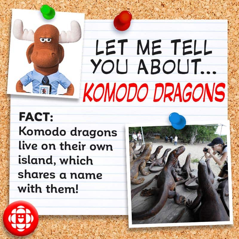 Komodo dragons live on their own island, which shares a name with them!