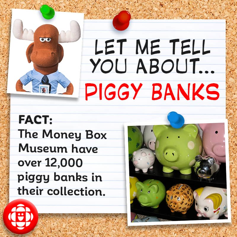 The Money Box Museum has over 12,000 piggy banks in their collection.
