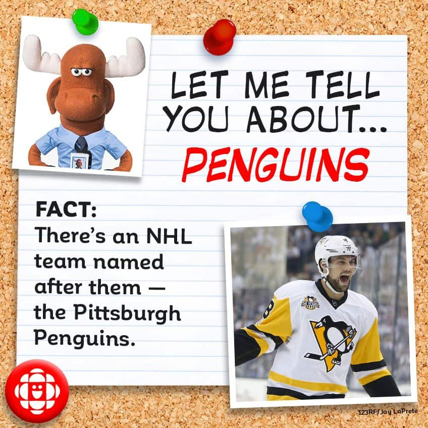 FACT: There's an NHL hockey team named after them — the Pittsburgh Penguins.