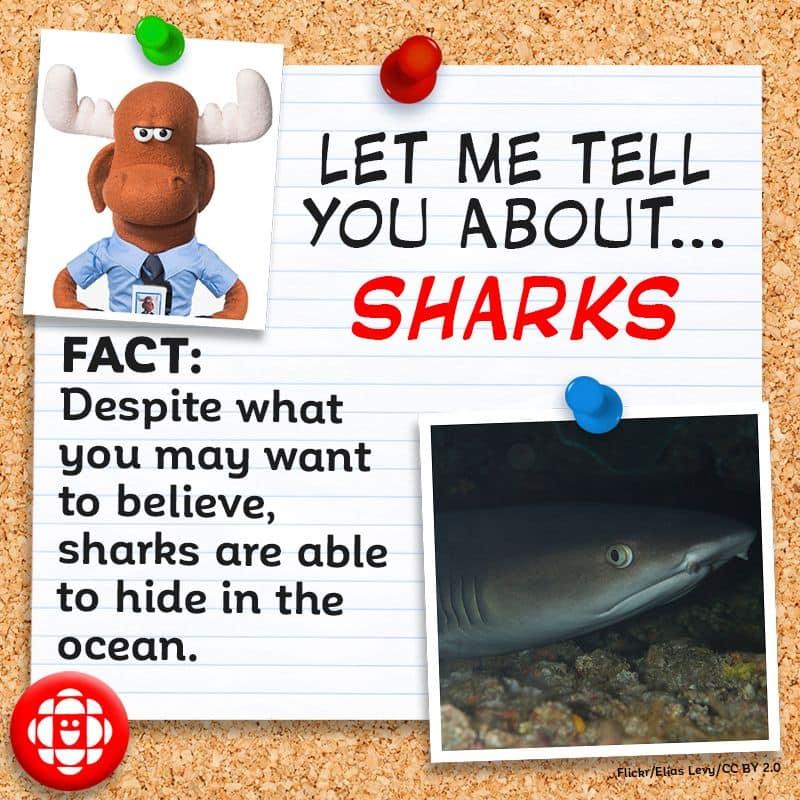 Sharks can hide in the ocean