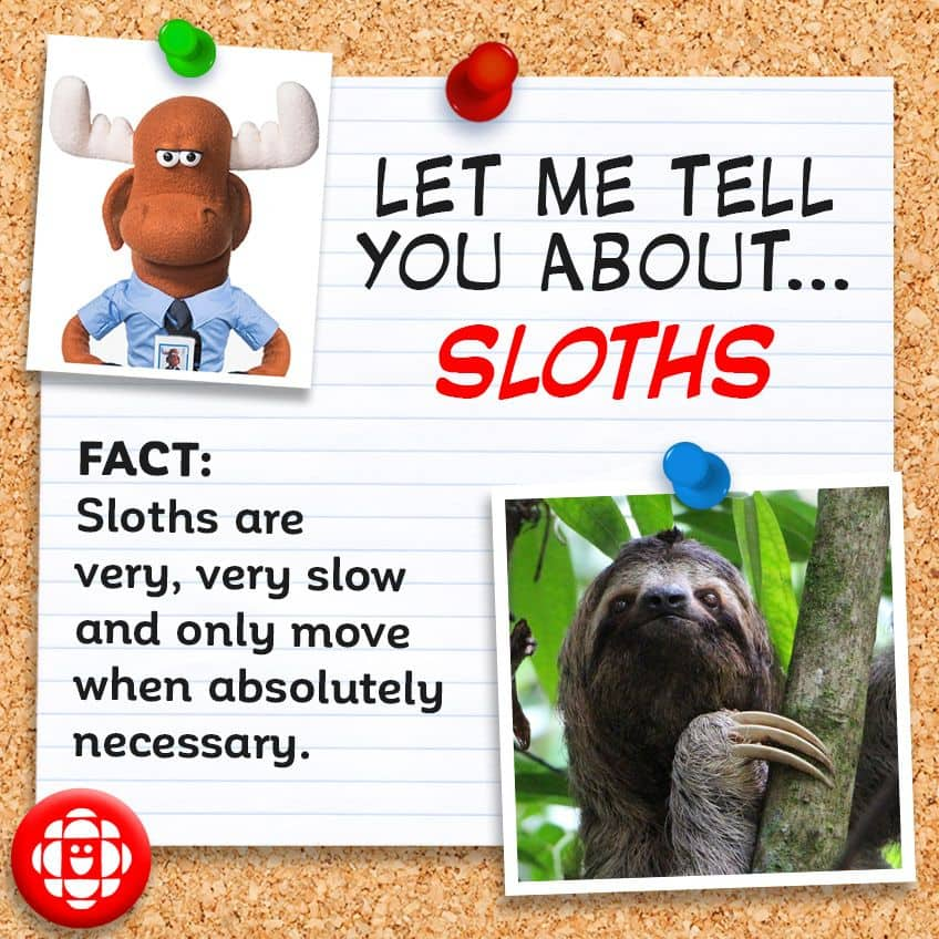 Fact - Sloths are very, very slow and only move when necessary