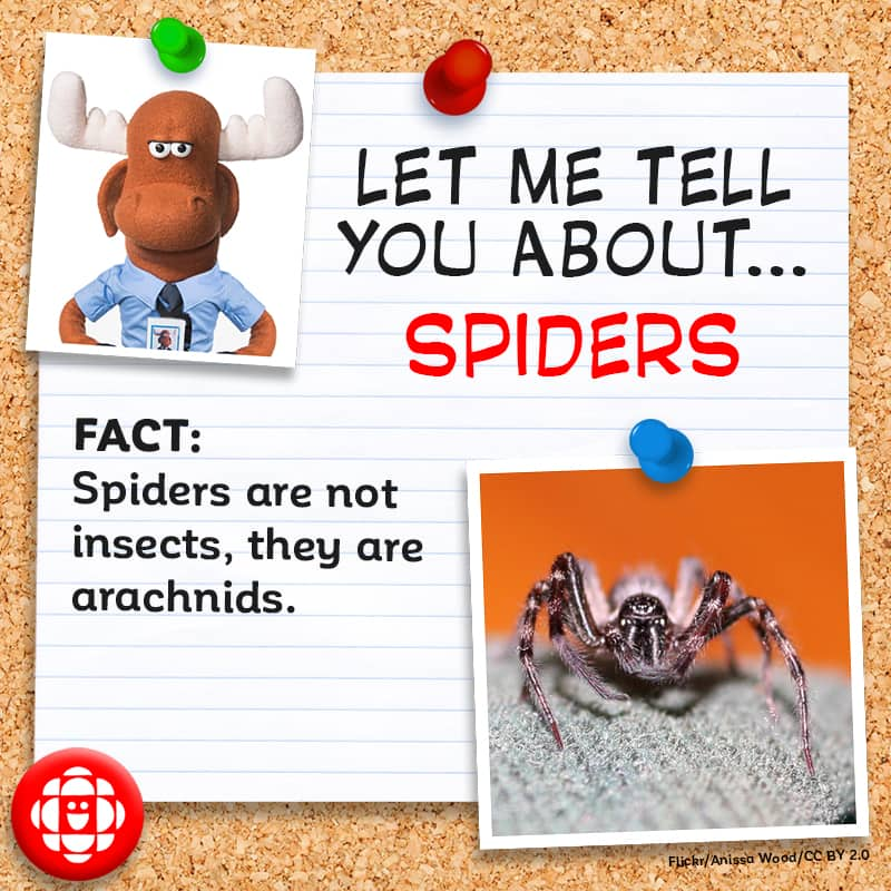 Spiders are not insects, they are arachnids.