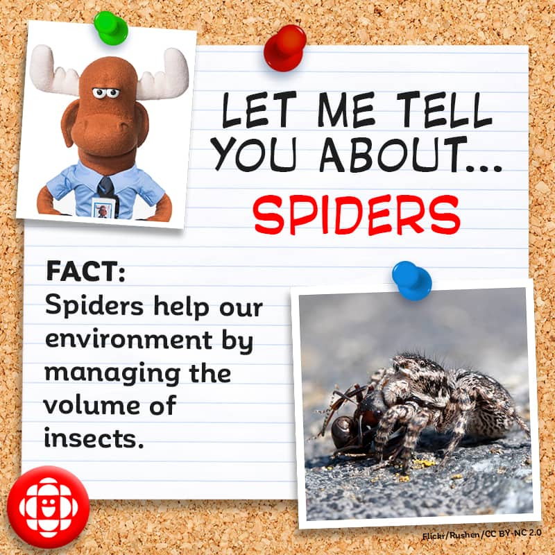 Spiders help take care of our environment by managing the volumes of insects.