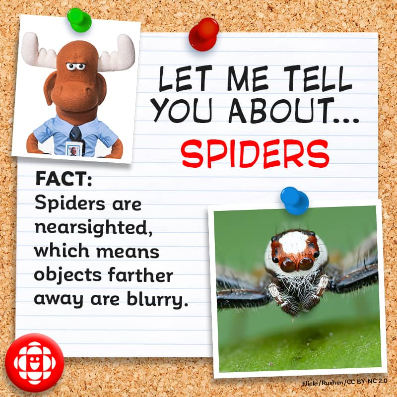 Spiders are nearsighted.
