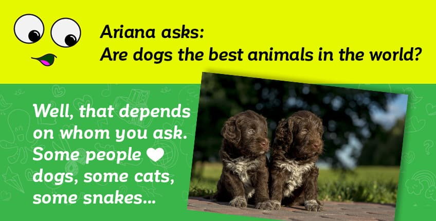 We answer your questions about… cats and dogs! | Explore