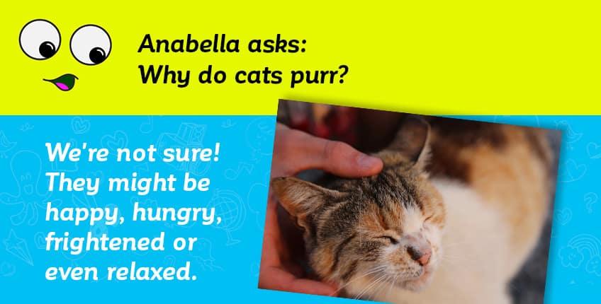 Anabella asks