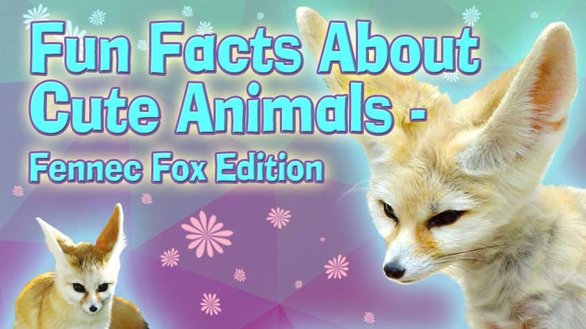 fun facts about cute animals fennec fox explore awesome