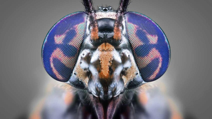 Summer pests quiz - flies with bite | Explore | Awesome ...