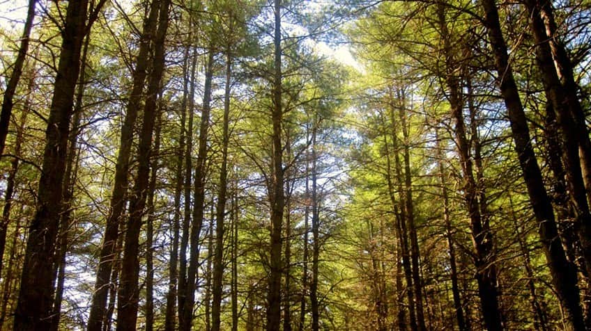 Trees Of Canada Explore Awesome Activities Amp Fun Facts