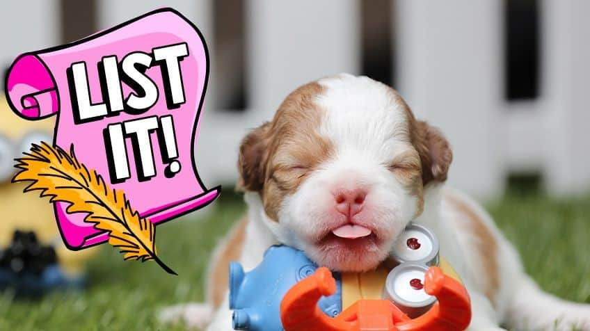 9 Surprising Facts About Puppies Explore Awesome Activities Fun Facts Cbc Kids