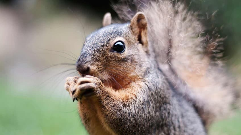 Nuts about squirrels quiz | Explore | Awesome Activities & Fun ...