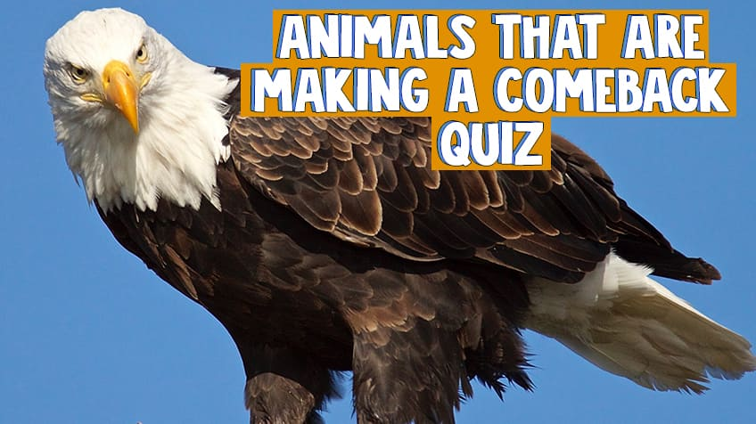 How much do you know about endangered animals? | Explore