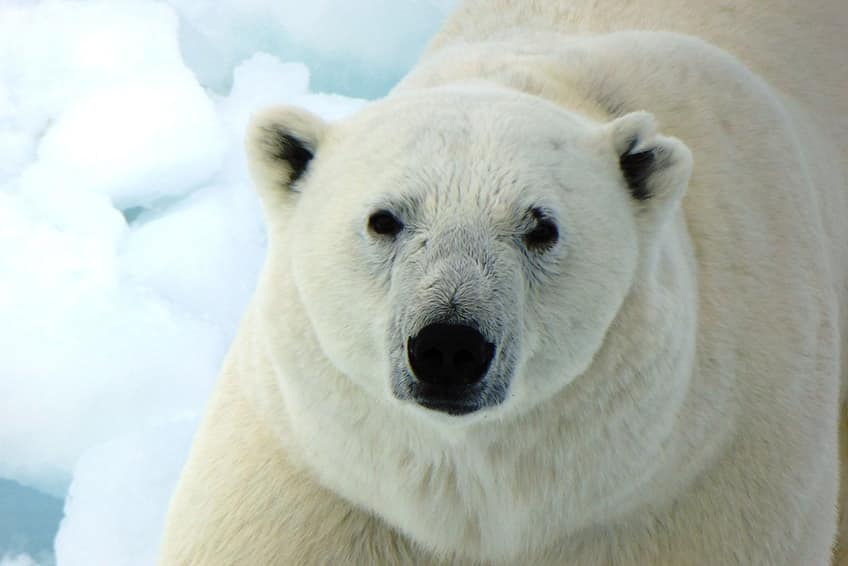 5 Cool Canadian Animals