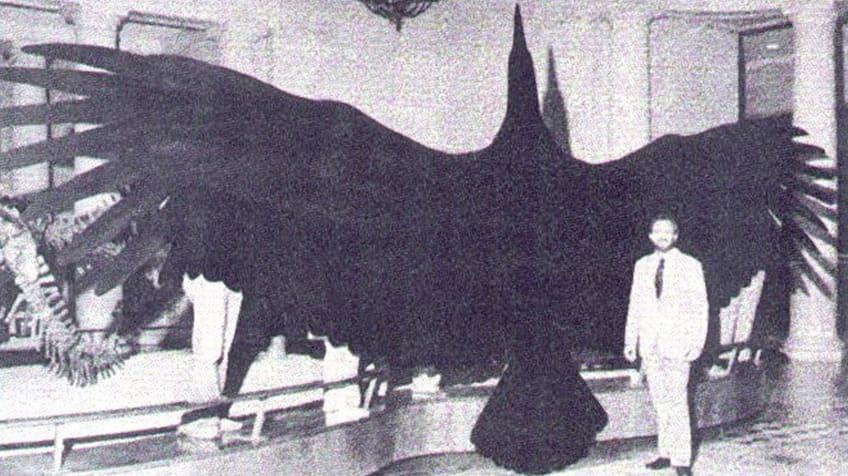 Um homem está ao lado de uma réplica maciça do Argetavis magnificens, que é um pássaro antigo.
