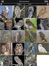Pictures of different owl species