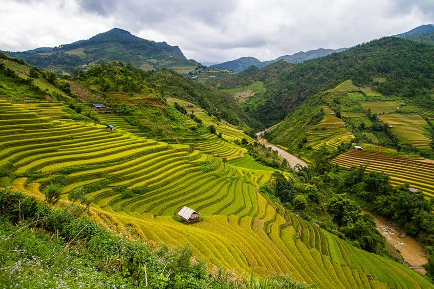 a wide view of the rice terraces of Vietnam