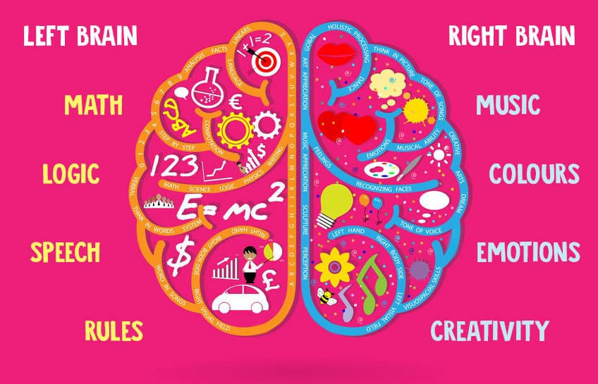 How does my brain work?   Explore   Awesome Activities ...