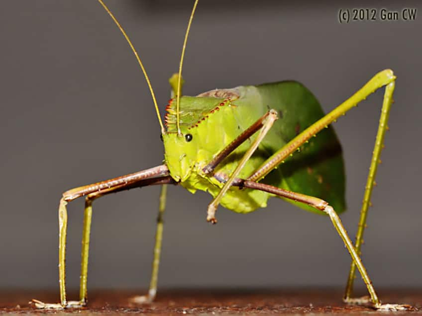 14 of the world's weirdest insects | Explore | Awesome ...