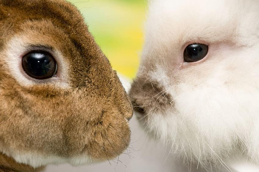two bunnies looking at each other