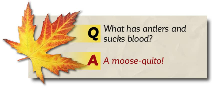 What has antlers and sucks blood? A moose-quito