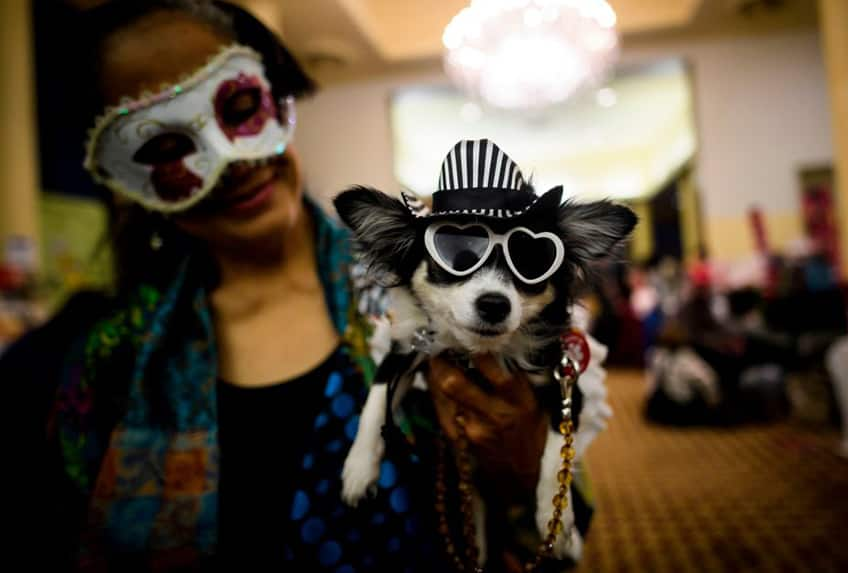 a woman hold her terrier that is wearing a little striped fedora and heart shaped sunglasses