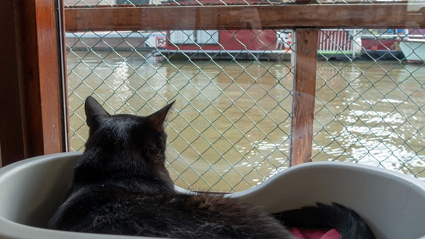 Cat looks out on to the canal.