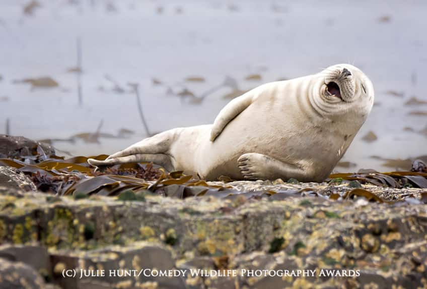 Comedy Wildlife PHotography Awards - highly commended
