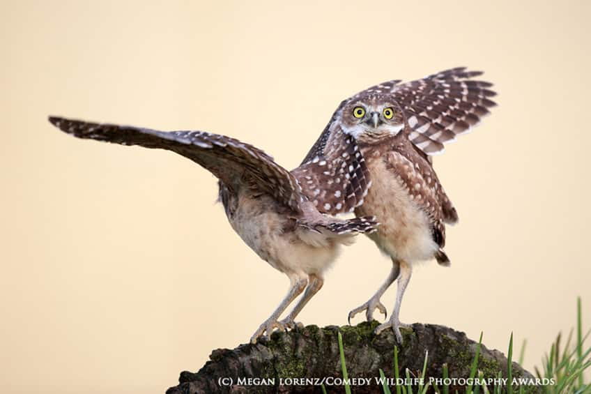Comedy Wildlife Photogaphy Awards - highly commended