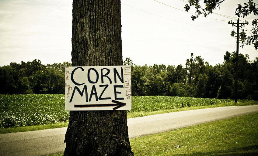 tree with a sign that say corn maze