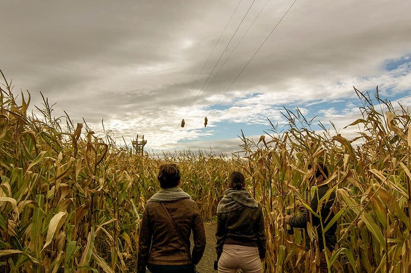 two people in the corn maze looking up at the zip line