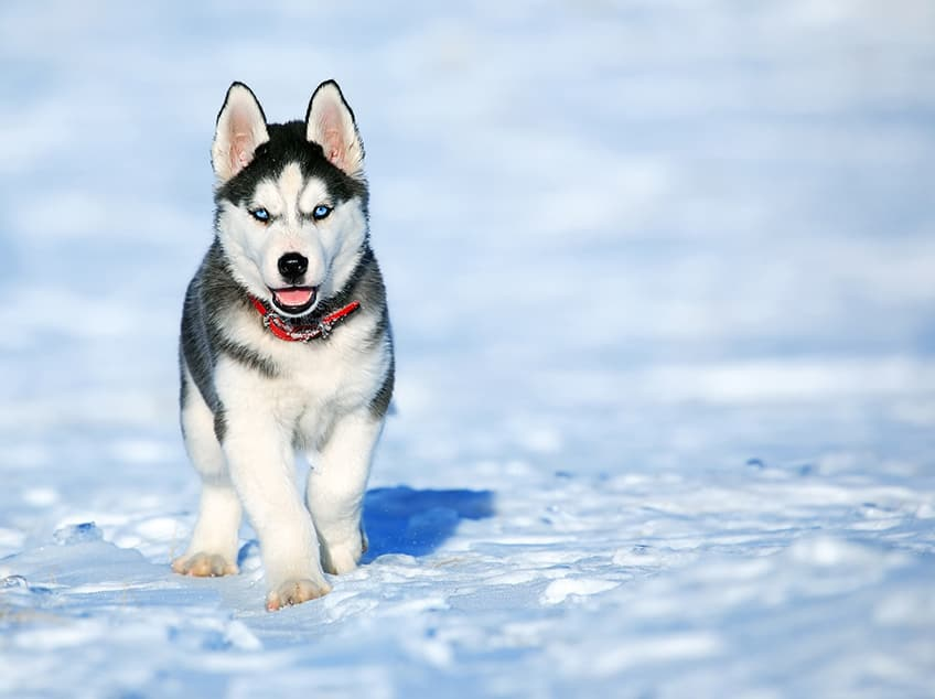 dog running across snow