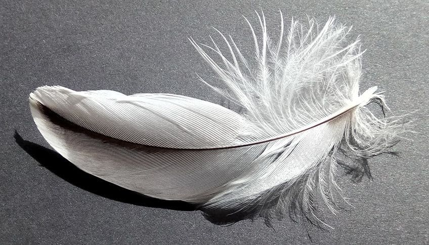 white bird feather