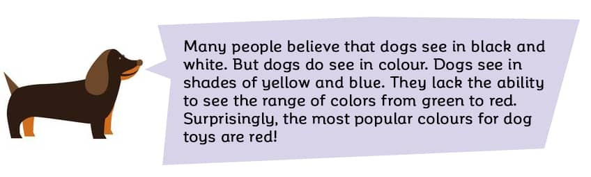 Many people believe that their dogs see in black and white, but dogs do in fact see in colour. Dogs see in shades of yellow and blue and lack the ability to see the range of colors from green to red. One amusing fact is that the most popular colours for dog toys are red!