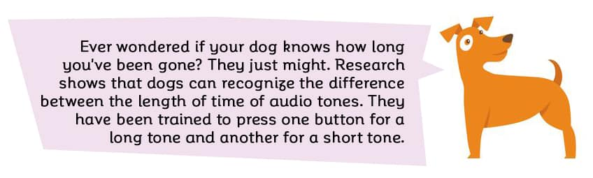Ever wondered if your dog knows how long you've been gone? There is a good chance that they do.  Research shows that dogs can recognize the difference between the length of time of audio tones. They have been trained to press one button for a long tone and another for a short tone.