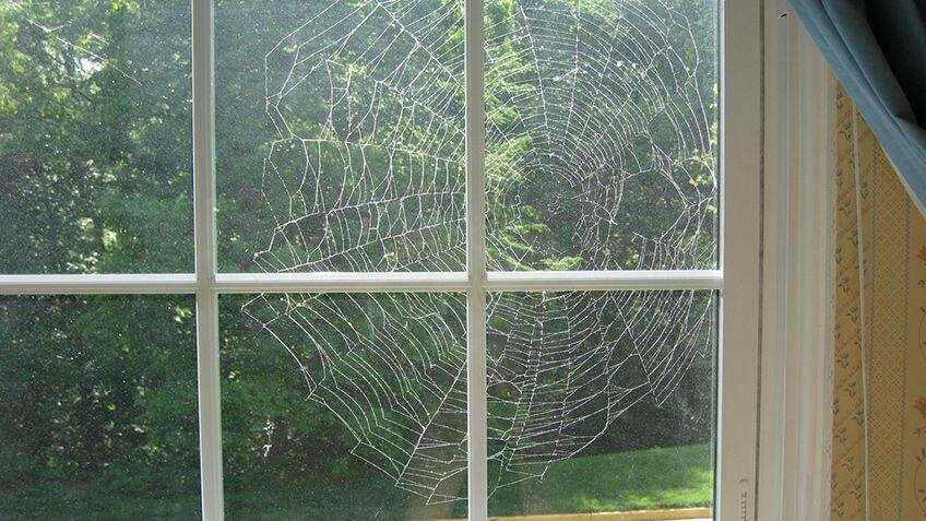 a spiderweb in a window