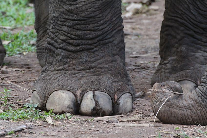 close-up of elephant feet