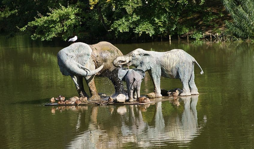 elephants on the water with a reflection