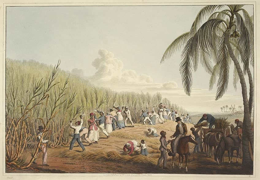 enslaved people cutting down sugar cane in the caribbean