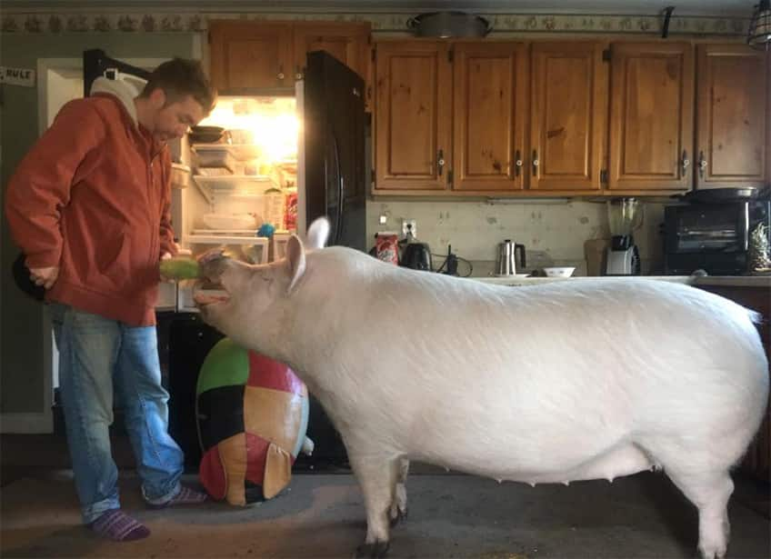 Esther The Wonder Pig Explore Awesome Activities Fun Facts