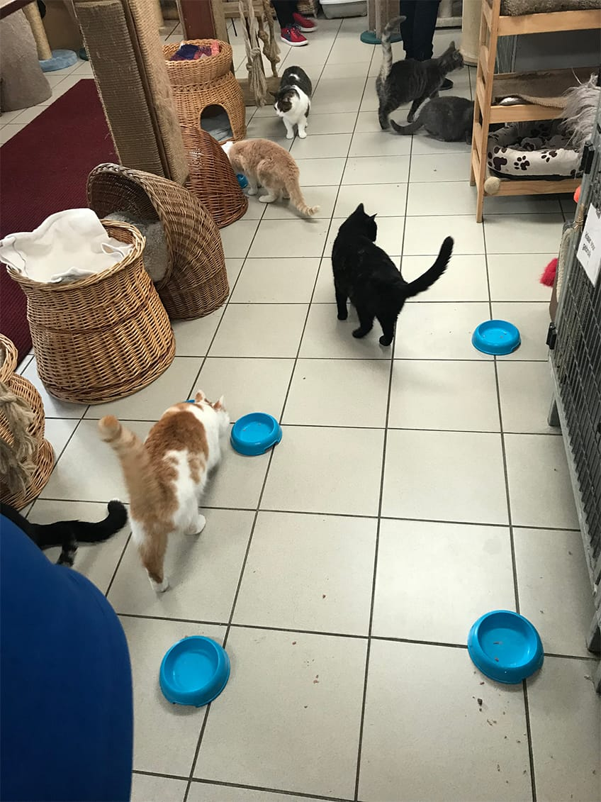 Feeding time for the cats.