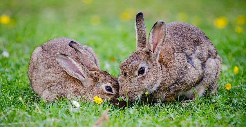 two happy bunnies in a field