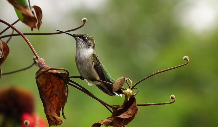 a hummingbird getting its food from a tree