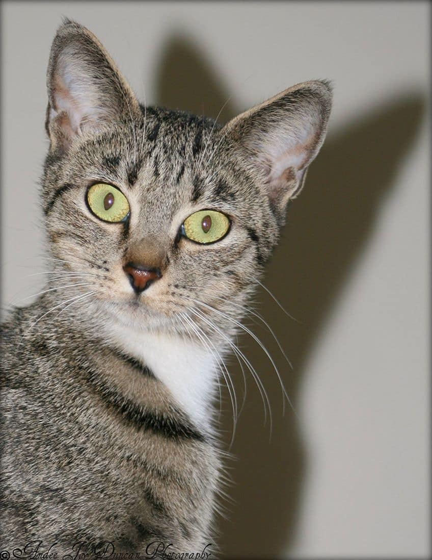 surprised cat