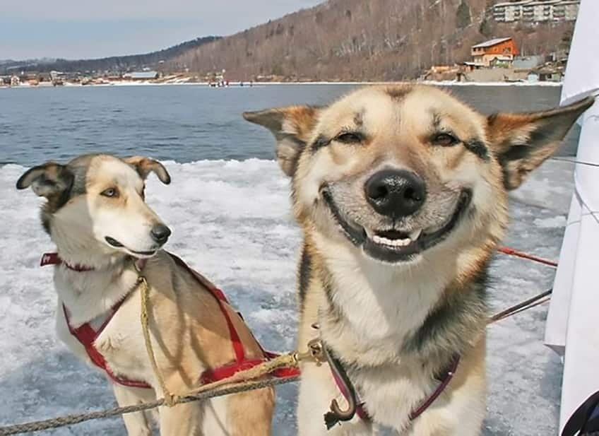 dog grinning from ear to ear