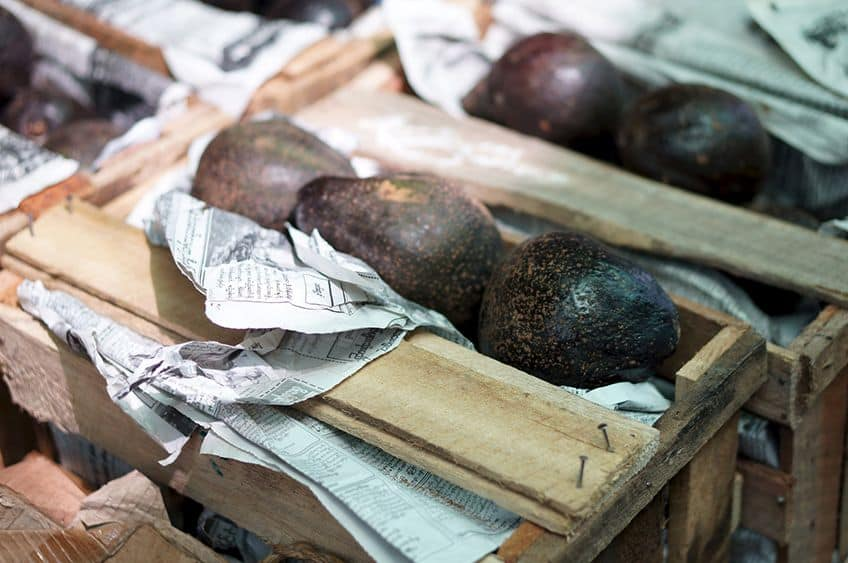 packing crates full of avocados